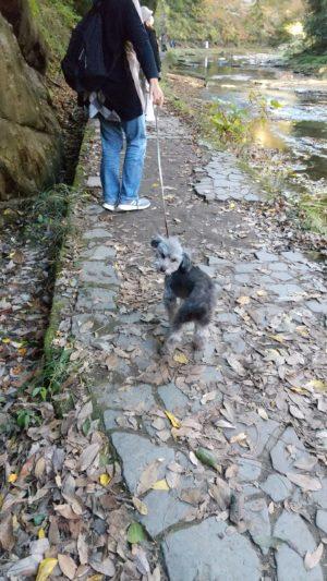 粟又の滝散歩中