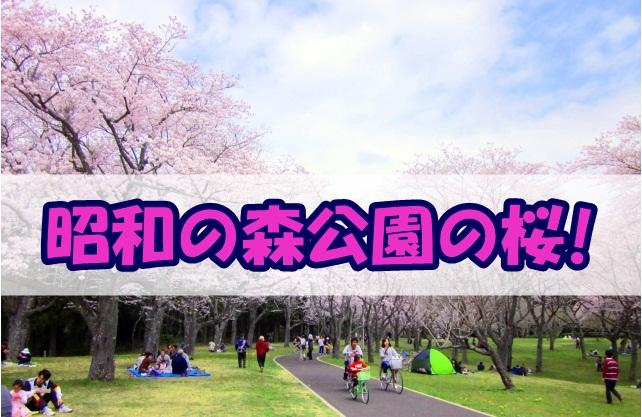 昭和の森公園の桜