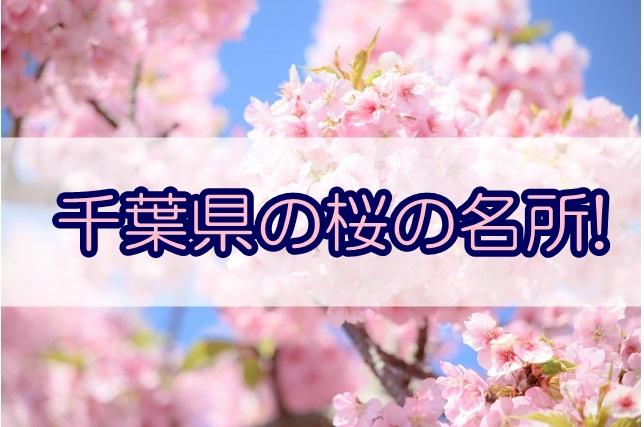 千葉県桜名所