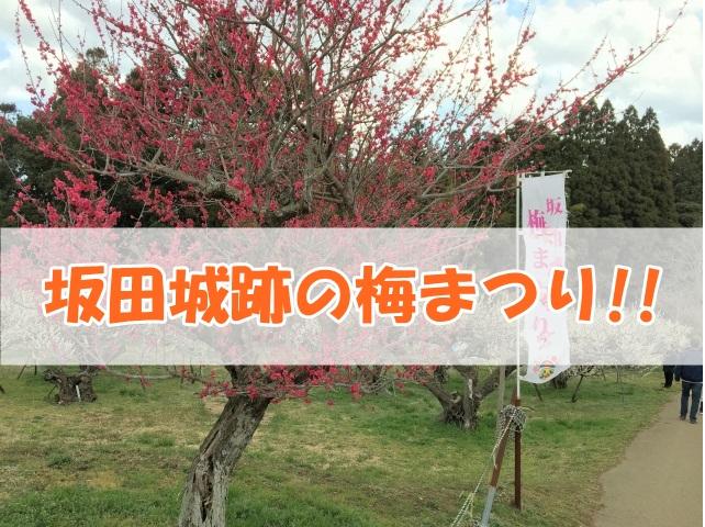 坂田城跡 梅まつり