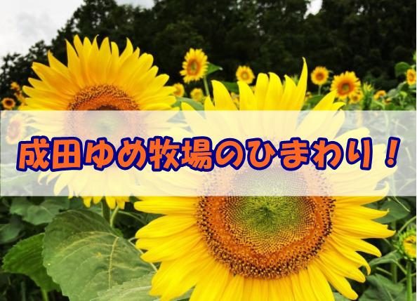 成田ゆめ牧場ひまわり