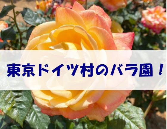 東京ドイツ村バラ
